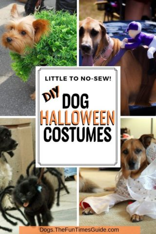 DIY Dog Halloween Costumes You Can Make Very Easily