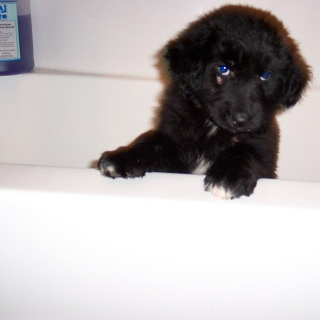 Destin's first bath.