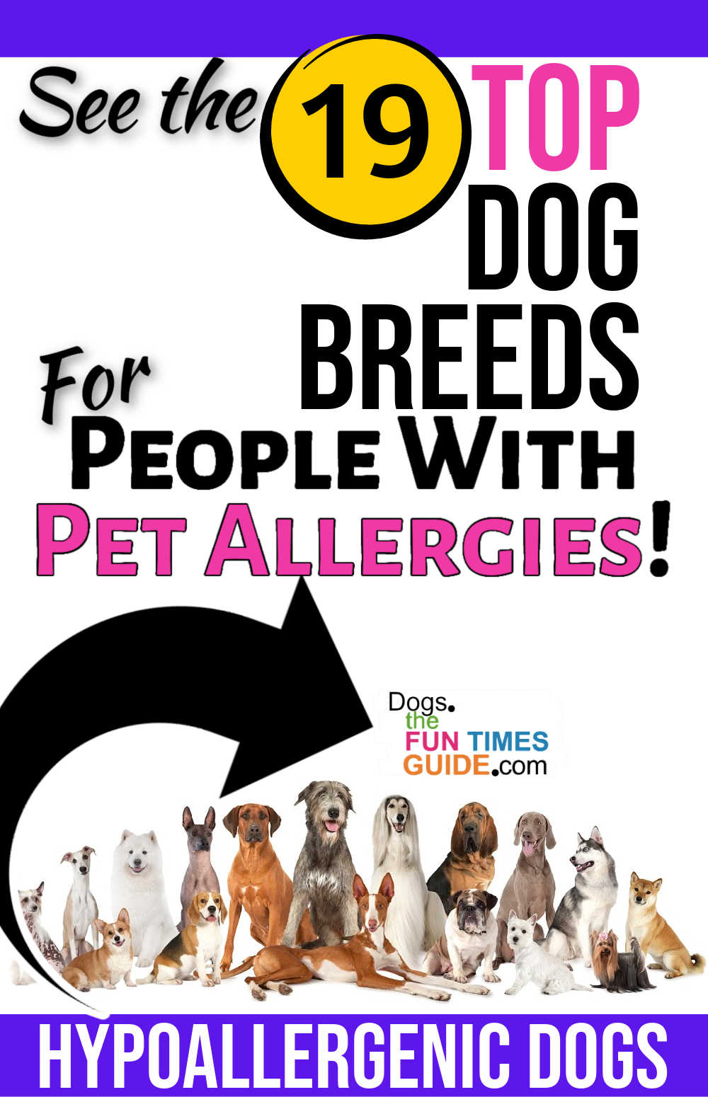 19 Of The Best Hypoallergenic Dog Breeds For People With Pet Allergies
