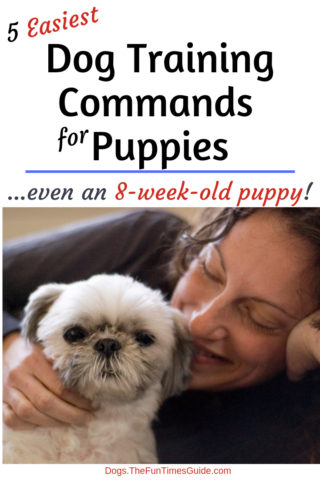 Wondering how to train an 8 week old puppy? Here are the 5 basic dog commands that puppies learn quickly!