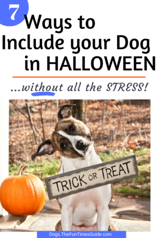 How to trick or treat with your dog OR at home with your dog this Halloween AND keep it fun for your dog!