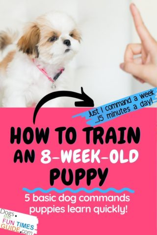 How to train an 8 week old puppy - basic dog training commands puppies understand