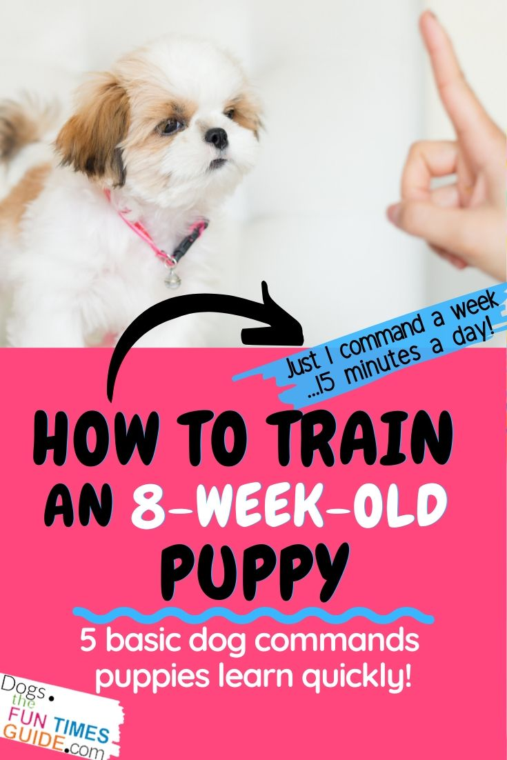 Dog Training Commands 101: How Do You Train An 8-Week-Old Puppy To Understand Basic Dog Commands?