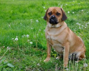 A List Of Names For Cross Breed Dogs This Mixed Dog Breeds List