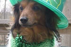 Fun Things To Do With Your Dog On St. Patrick's Day