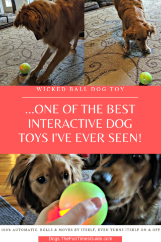 The Wicked Ball dog toy is one of the best interactive dog toys I've ever seen.