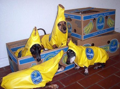 a-bunch-of-chiquita-banana-dogs.jpg