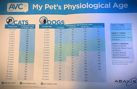 See how your dog's physical age (number of years alive) compares to your dog's physiological age (physical abilities based on your dog's size and weight).