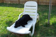 adult-dog-on-lawn-chair.jpg