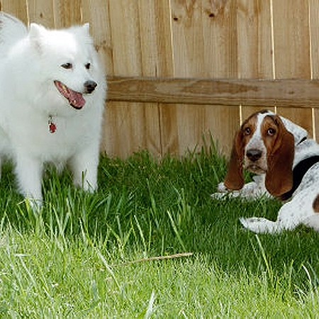 Jersey and Bella in the backyard.
