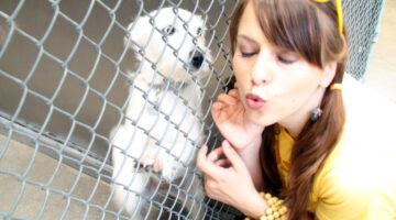 Wish List Donations For Dogs & Cats In Animal Shelters: What Non-Profits REALLY Need