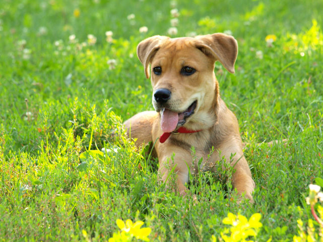 how to dog proof your yard 6 things you should do right