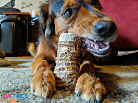 Beef trachea sounds gross, but it makes a tasty and long lasting dog chew!