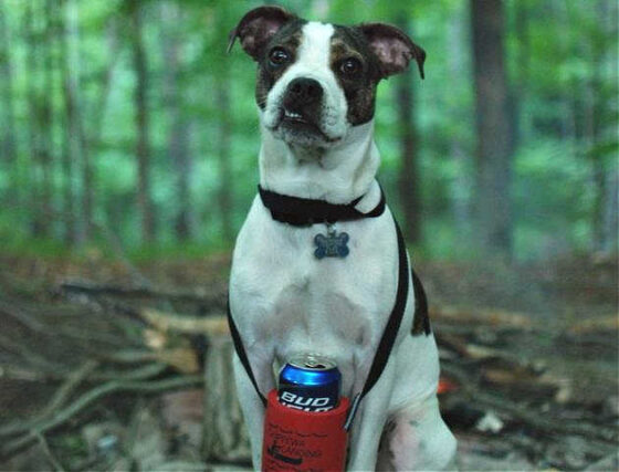 A dog who retrieves a beer for their human.