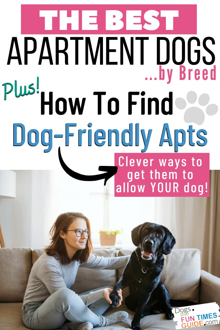 Best Apartment Dogs By Breed + Tips For Finding Dog Friendly Apartments That You'll Be Happy In