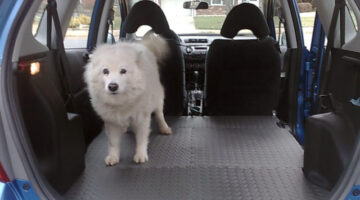 Best Cars For Dog Owners + What To Look For In A Dog-Friendly Vehicle