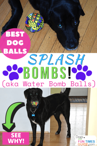 The best dog balls ever are Splash Bombs... see why!