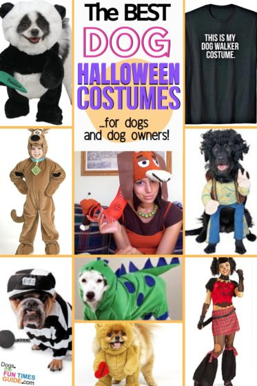 The best dog Halloween costumes for dogs AND dog owners!