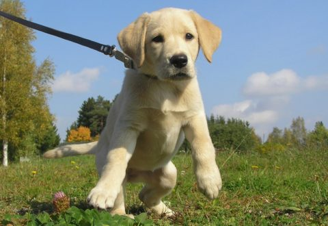 The type of dog training leash you choose matters!