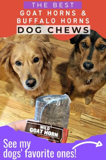 See all the best goat horns and buffalo horns for dog chews!