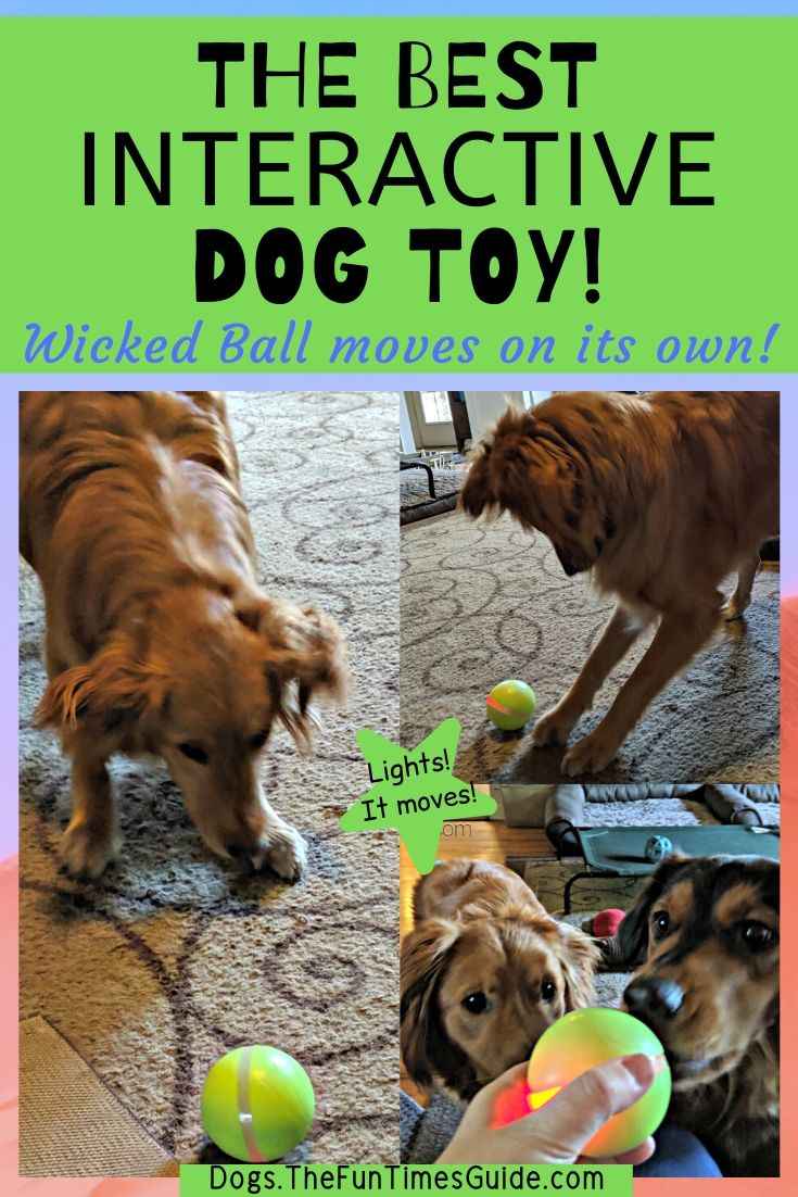 I've Tried A LOT Of Different Interactive Dog Toys To Prevent My Dogs From Getting Bored… Wicked Ball Is The Best So Far!