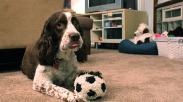 10 Best Toys For Dogs With No Teeth (Or Few Teeth) And Senior Dogs
