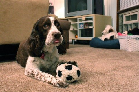 best-toys-for-dogs-with-no-teeth
