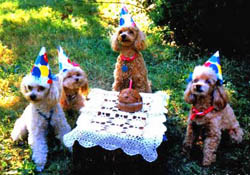 Birthday Party For Dogs