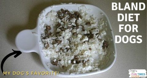 A bland diet like rice and cottage cheese is a simple DIY dog diarrhea treatment that you can try at home.