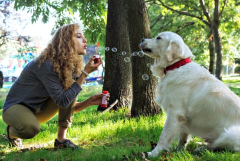 Some dogs like to chase the bubbles, some like to eat them, others just like the feeling of bubbles popping on their nose!