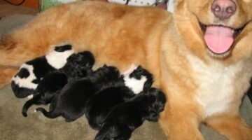 Dog Labor & Delivery: What To Expect On The Day Your Dog's Puppies Are Born
