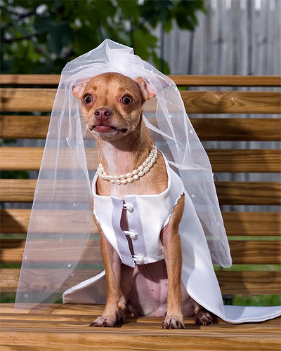 Bride Dog: (gulp) What did I agree to?!