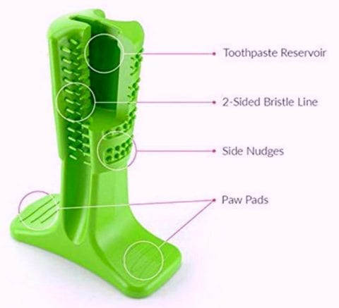 These are the key features of the Bristly dog toothbrush toy