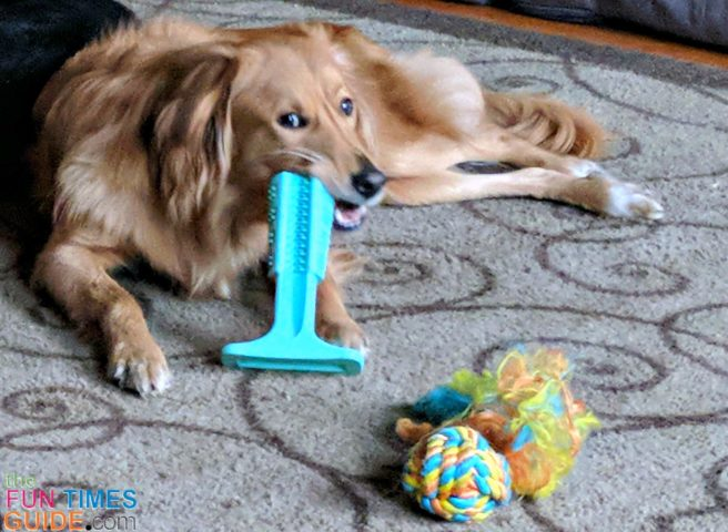 The Bristly dog toothbrush is a quicker and easier way to brush my dogs' teeth - instead of doing it manually!