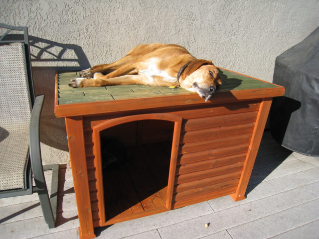 #AB4E20 Dog Houses 101: How To Choose The Best Dog House Or Build Your Own  1024x768 px Banheiro Para Cachorro Grande 2647