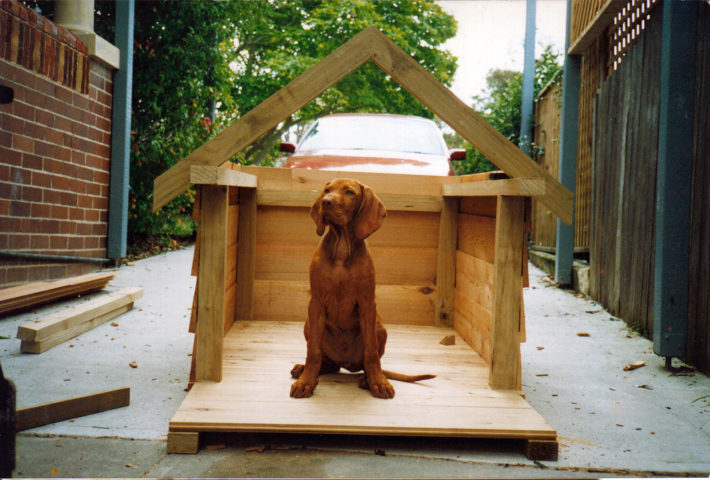Dog Houses 101 How To Choose The Best Dog House Or Build Your Own