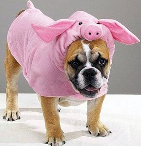 bulldog-wearing-pig-costume.jpg
