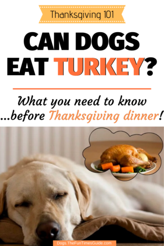 Can dogs eat turkey for Thanksgiving Dinner?