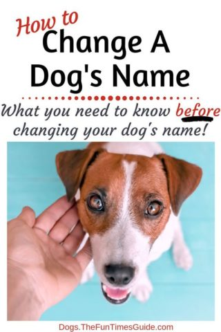 How and when to change a dog's name.