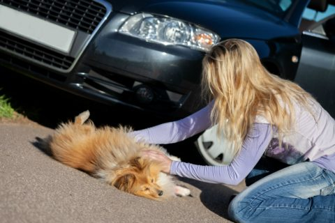 If your car hit a dog, you must stop!