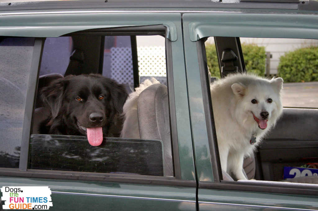 Car rides with multiple dogs takes more time and preparation.