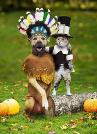 A cat and dog dressed like Thanksgiving pilgrims.