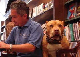 Do NOT Bring A New Dog Home Until You Watch These Cesar Millan DVDs!