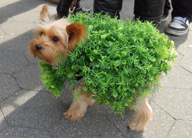 6 funny dog halloween costumes you can make with little or no sewing chia dog costume solutioingenieria Choice Image