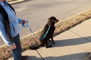 clicker-leash-3-foot.jpg