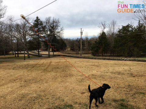 Each dog has 16 feet of leash and 100 feet of cable to roam the entire backyard.