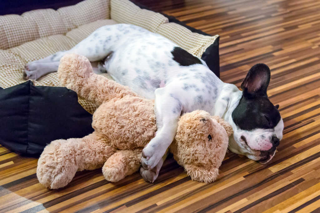 It's important that your dog has enough space to sleep and move around comfortably when you leave him home alone. Here are some ideas.
