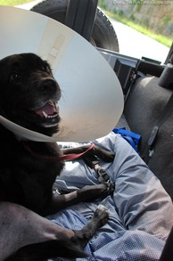conehead-dog-tenor-in-jeep.jpg