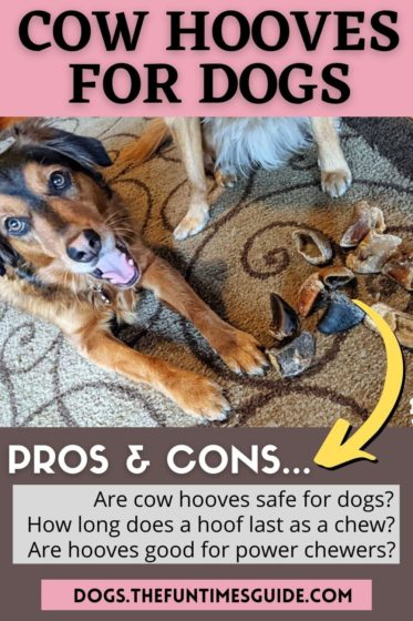 See the pros & cons of cow hooves for dogs to chew on