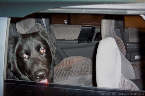 destin-moments-after-he-fell-out-the-car-window.jpg